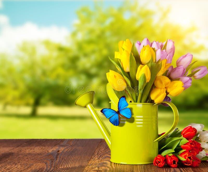 Ramalhete da flor da tulipa da mola em pranchas de madeira foto de stock