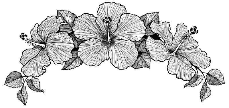 Ramalhete da flor de três hibiscus ilustração stock