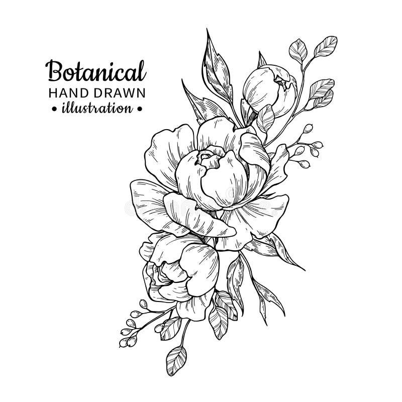 Ramalhete da flor do vintage Desenho do vetor Peônia, rosa, folhas e ilustração royalty free
