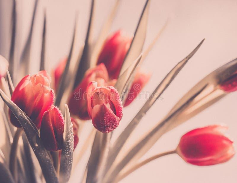 Ramalhete da mola de flores vermelhas das tulipas no estilo retro foto de stock royalty free
