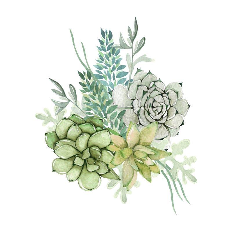 Ramalhete da planta carnuda da aquarela ilustração royalty free