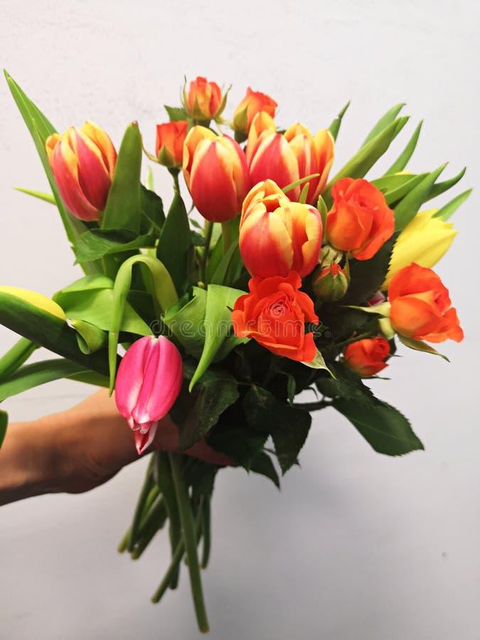 Ramalhete da terra arrendada da mão de tulipas e de rosas bonitas foto de stock royalty free