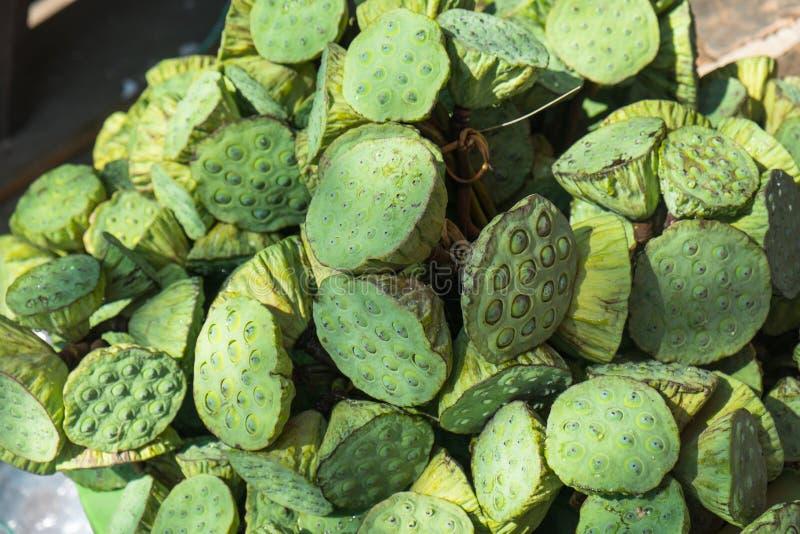 Ramalhete da vagem da semente de Lotus fotografia de stock royalty free