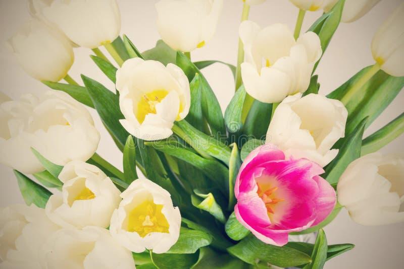Ramalhete das flores brancas das tulipas e de um close up vermelho imagem de stock