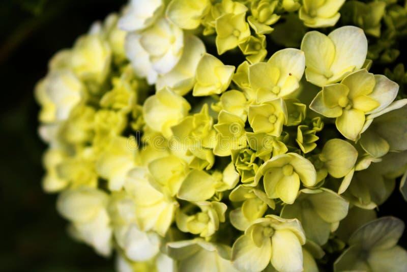 Ramalhete das flores da noiva fotos de stock