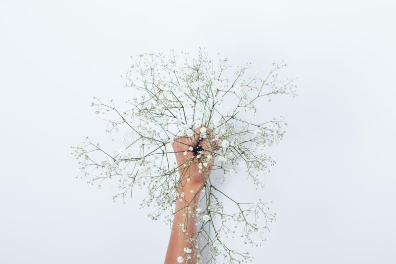 Ramalhete das flores do Gypsophila na mão da menina no fundo branco imagem de stock royalty free