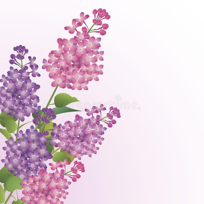 Ramalhete das flores do lilac ilustração royalty free