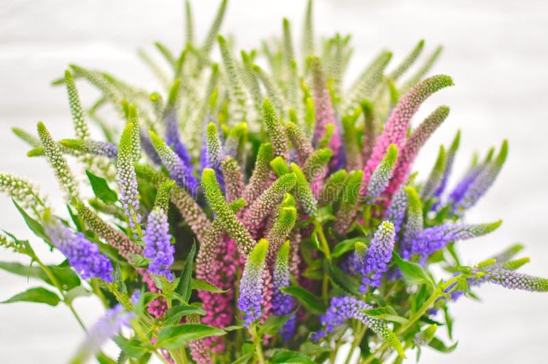 Ramalhete das flores no fundo branco fotos de stock royalty free