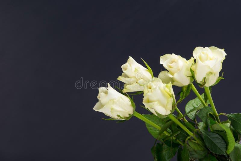 Ramalhete das rosas frescas brancas em um fundo preto fotos de stock
