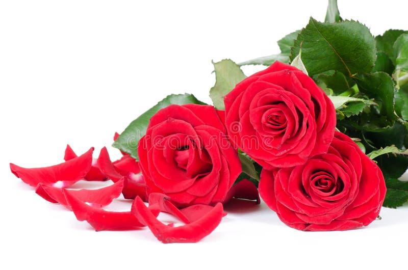 Ramalhete de rosas vermelhas fotografia de stock royalty free