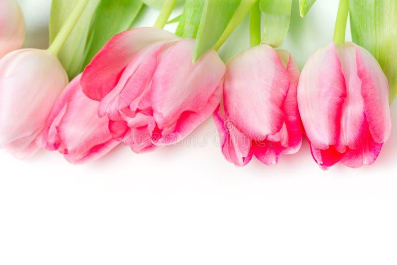 Ramalhete das tulipas do rosa da flor da mola fotos de stock