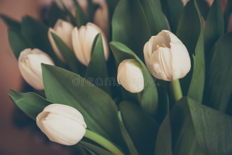 Ramalhete das tulipas em cores pastel retros no estilo do vintage como o fundo dos cumprimentos imagens de stock