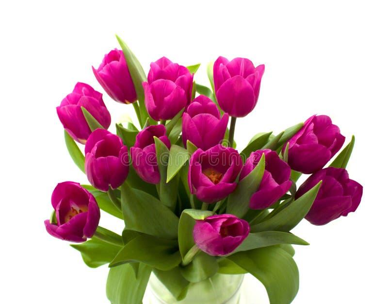 Ramalhete das tulipas frescas isoladas no fundo branco fotos de stock