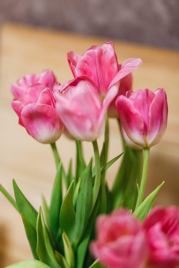 Ramalhete das tulipas na mola foto de stock