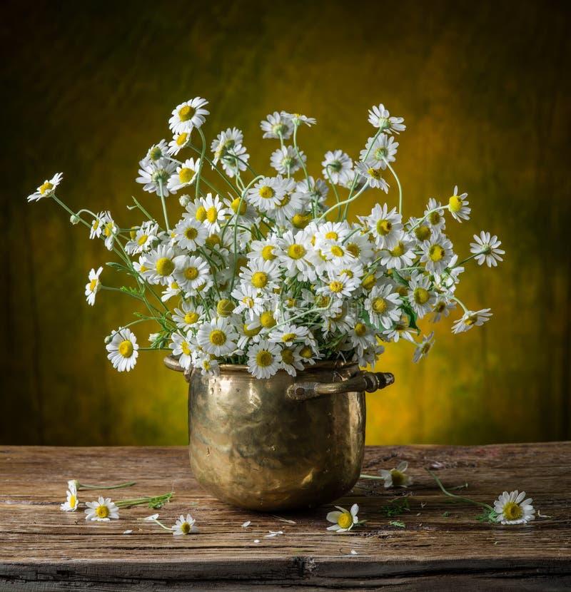Ramalhete de camomilas de campo no vaso foto de stock royalty free