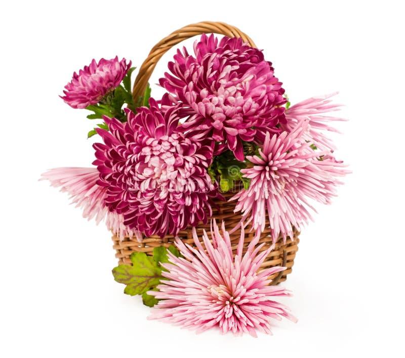 Ramalhete de crisântemos cor-de-rosa fotos de stock