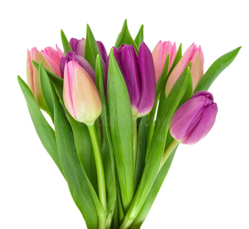 Ramalhete de flores coloridas da tulipa da mola com as folhas verdes na haste isolada em um fundo branco imagens de stock royalty free