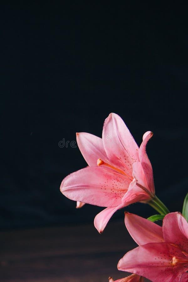 Ramalhete de flores cor-de-rosa do l?rio nos raios de luz em um fundo preto em uma tabela r?stica de madeira bot?es frescos de um fotos de stock royalty free