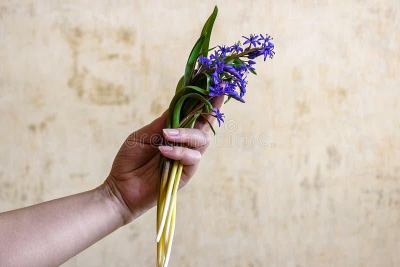 Ramalhete de flores da floresta na mão fêmea imagens de stock