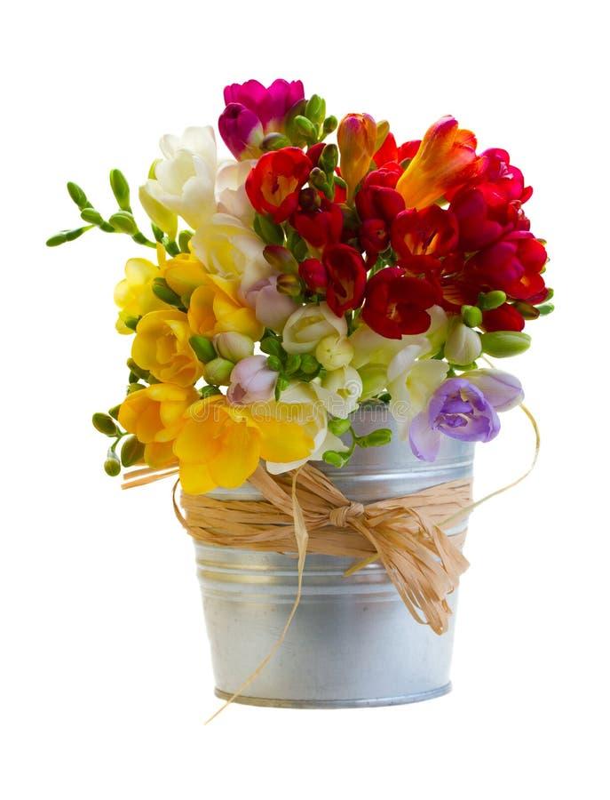 Ramalhete de flores das frésias no potenciômetro do metal fotografia de stock royalty free