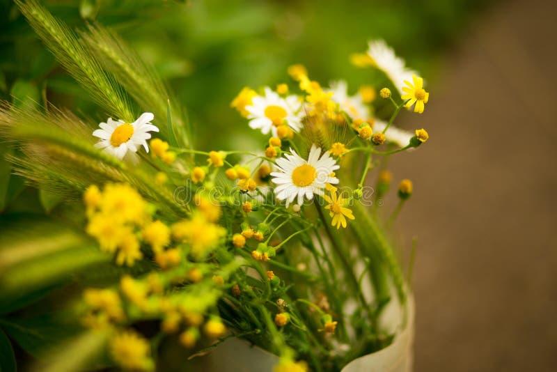 Ramalhete de flores do campo dos spikelets e das margaridas fotografia de stock