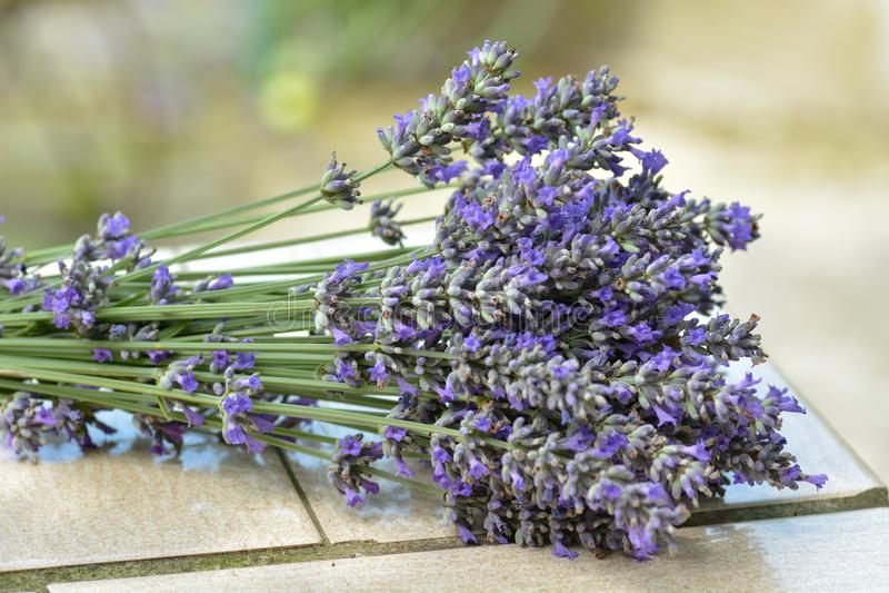 Ramalhete de flores do lavanda fotos de stock royalty free