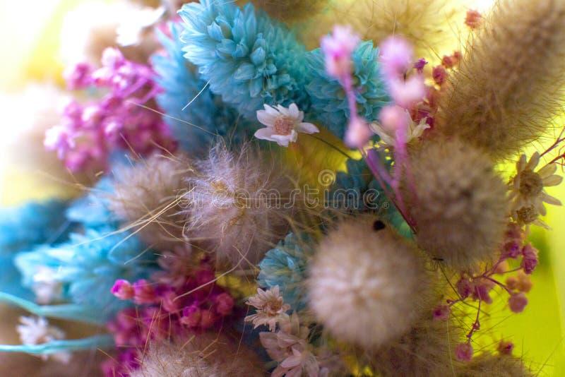 Ramalhete de flores secadas fotografia de stock royalty free
