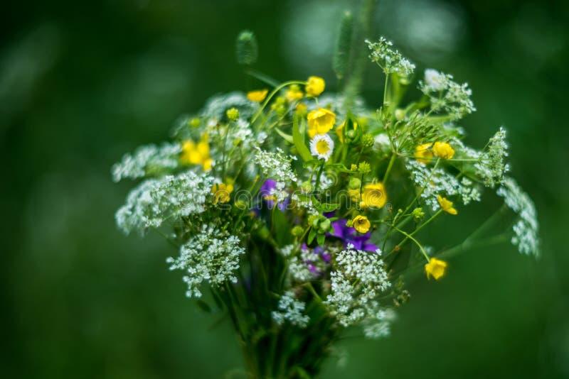 Ramalhete de flores selvagens fotos de stock royalty free