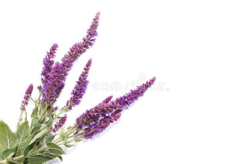 ramalhete de flores selvagens roxas imagem de stock royalty free