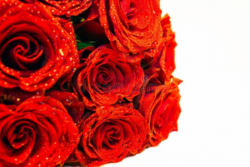 Ramalhete de flores vermelhas com gotas da chuva e contexto branco fotografia de stock