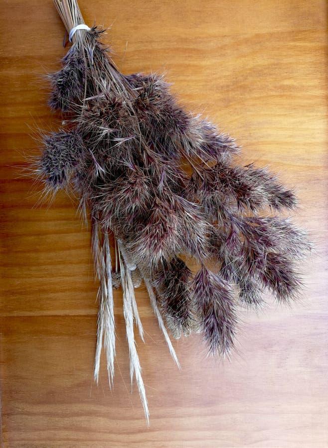 Ramalhete de gramas secadas foto de stock
