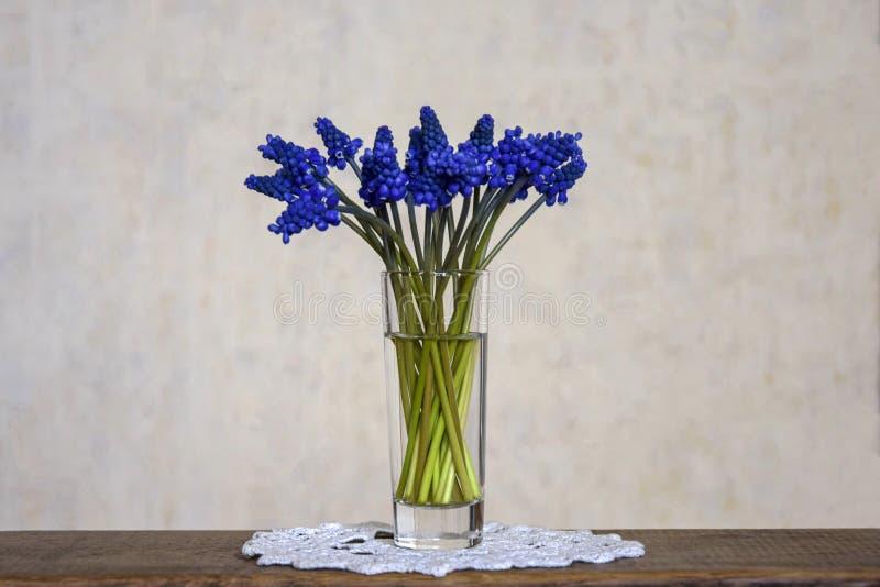 Ramalhete de jacintos de uva azuis das flores da mola imagem de stock