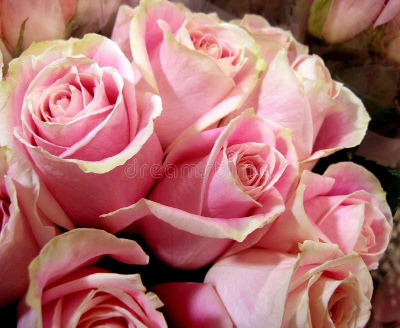 Rose Bouquet fotografia de stock royalty free