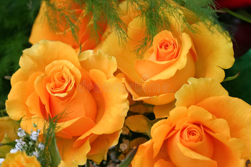 Ramalhete de rosas amarelas imagens de stock royalty free