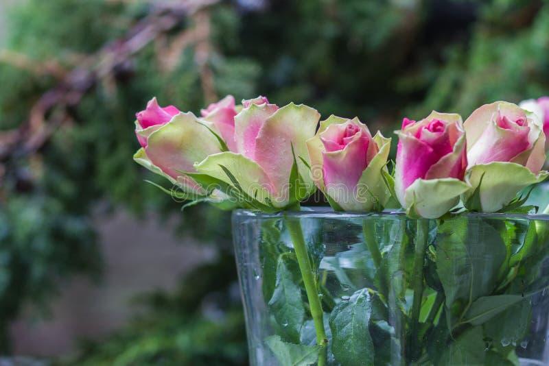 Ramalhete de rosas atrativas frescas com gota da rédea fotos de stock royalty free