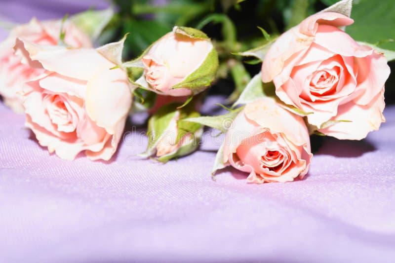 Ramalhete de rosas cor-de-rosa fotografia de stock