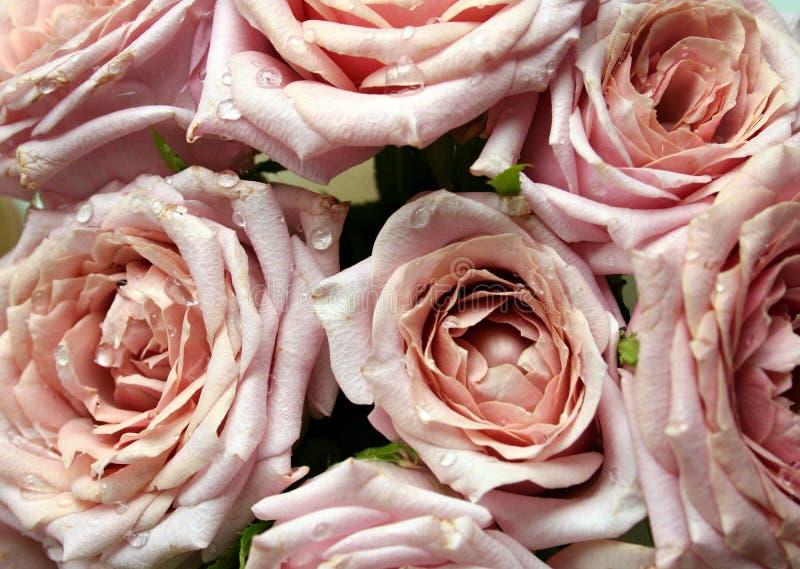 Ramalhete de rosas cor-de-rosa com orvalho foto de stock