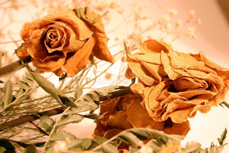 Ramalhete de rosas secadas imagens de stock