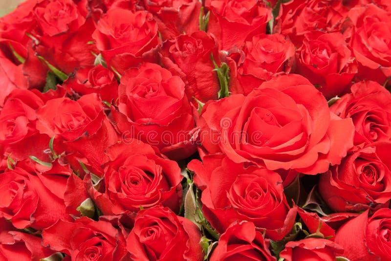 Ramalhete de rosas vermelhas para o fundo romântico do presente fotografia de stock