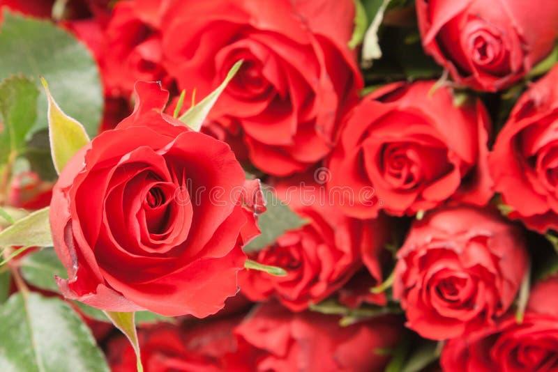 Ramalhete de rosas vermelhas para o fundo romântico do presente fotos de stock