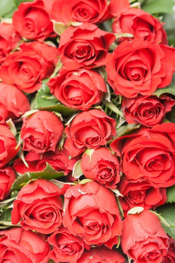 Ramalhete de rosas vermelhas para o fundo romântico do presente fotos de stock royalty free