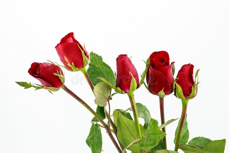Ramalhete de rosas vermelhas sobre o fundo branco imagens de stock royalty free