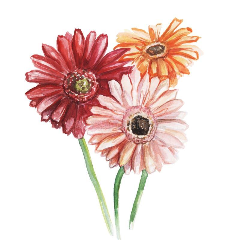 Ramalhete de tr?s gerberas-alaranjados, de rosa e de vermelho Esbo?o da aquarela Isolado no fundo branco ilustração stock