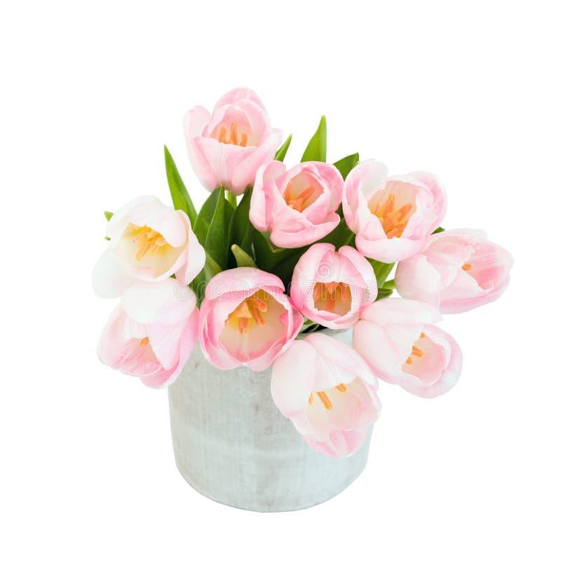 Ramalhete de tulipas cor-de-rosa no vaso Isolado sobre o foco branco, seletivo imagens de stock royalty free