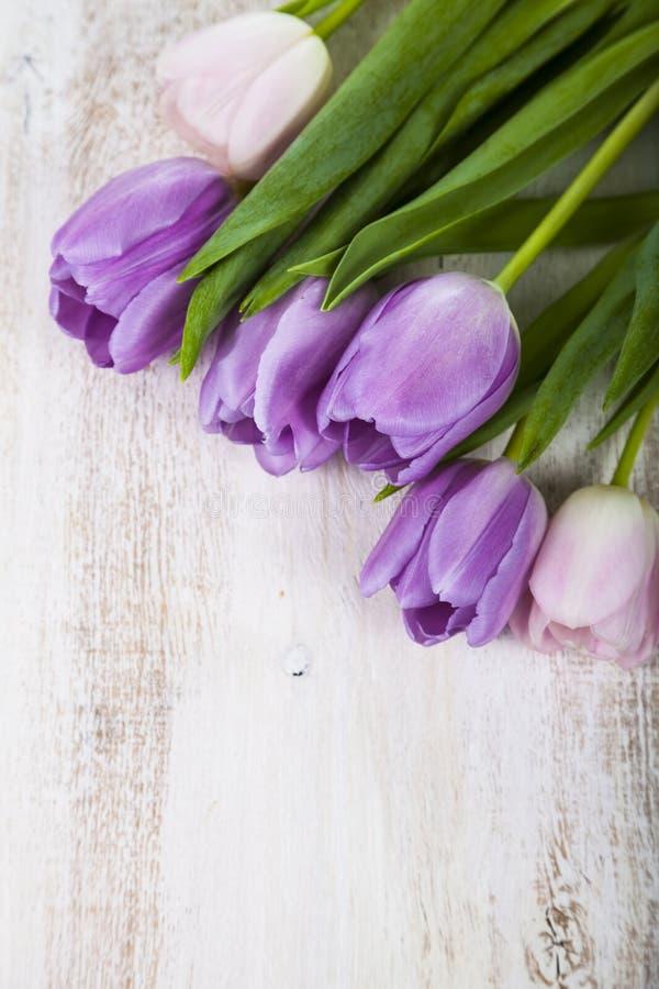 Ramalhete de tulipas lilás imagem de stock