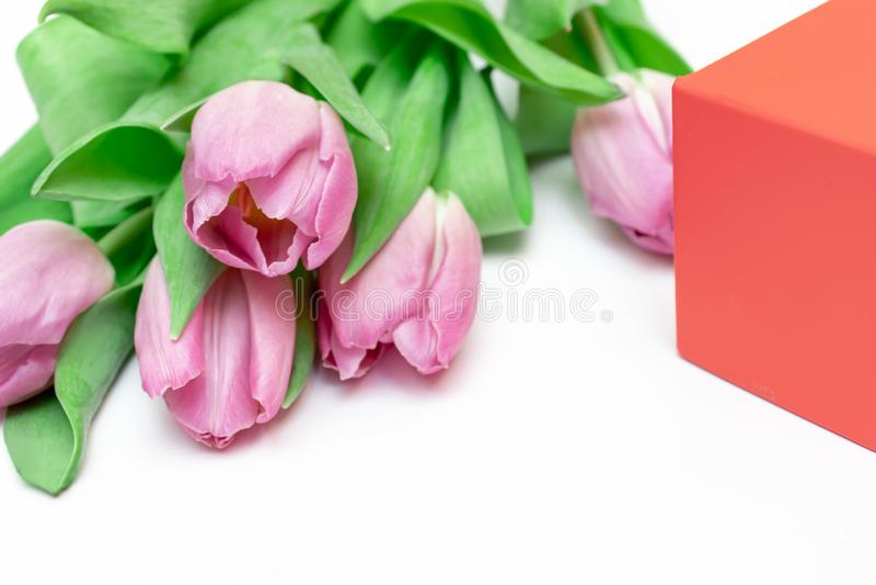 Ramalhete de tulipas lilás cor-de-rosa cortadas com uma caixa de presente vermelha no fundo branco com fim do espaço da cópia aci foto de stock royalty free
