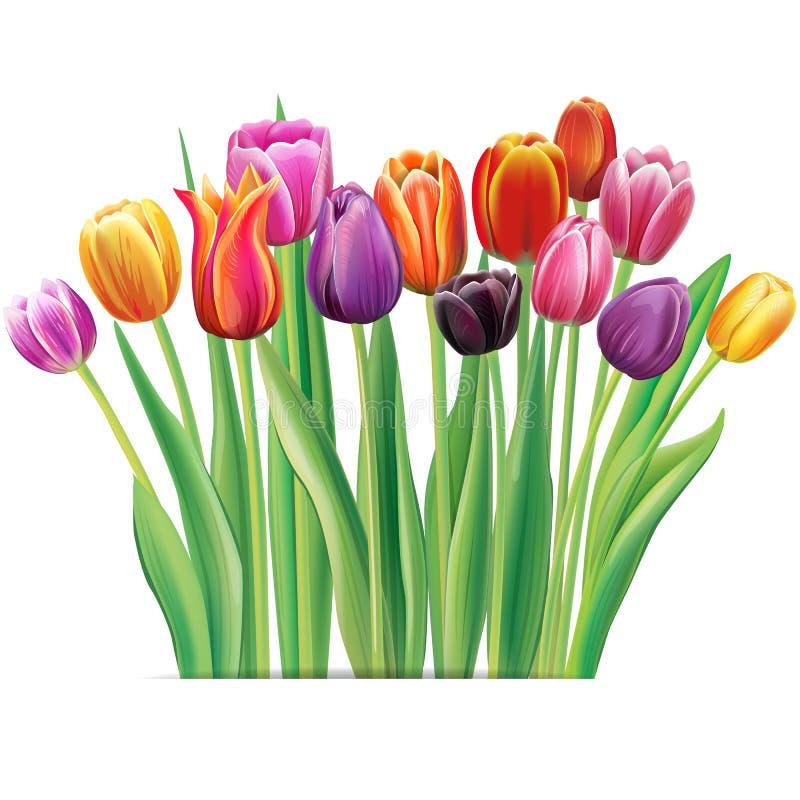 Ramalhete de tulipas multicoloridos ilustração royalty free