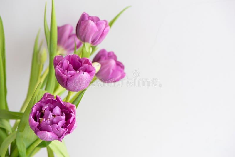 Ramalhete de tulipas roxas cor-de-rosa em um fundo claro Cart?o do feriado imagens de stock royalty free