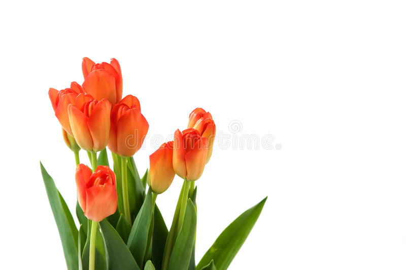 Ramalhete de tulips alaranjados bonitos imagens de stock