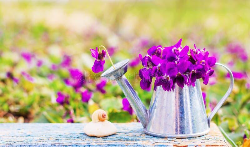 Ramalhete de violetas das flores da floresta em um caracol da lata molhando e do escudo da lata em uma pedra em uma placa retro d imagens de stock royalty free
